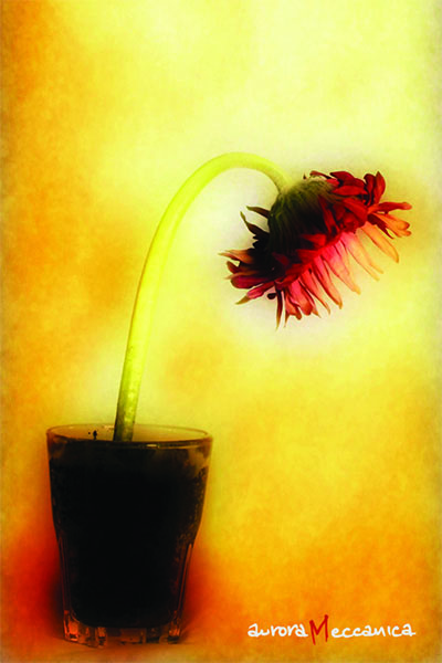 life a flower 1